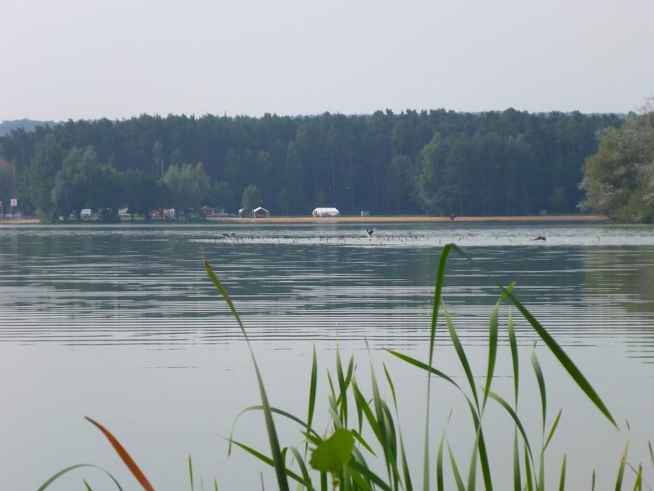 Баклан, озеро, стайка