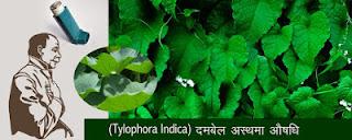 दमबेल- काली- मिर्च- अस्थमा- के- लिए- अचूक औषधि, Dambel-Dambooti-for-Asthma-in-Hindi,