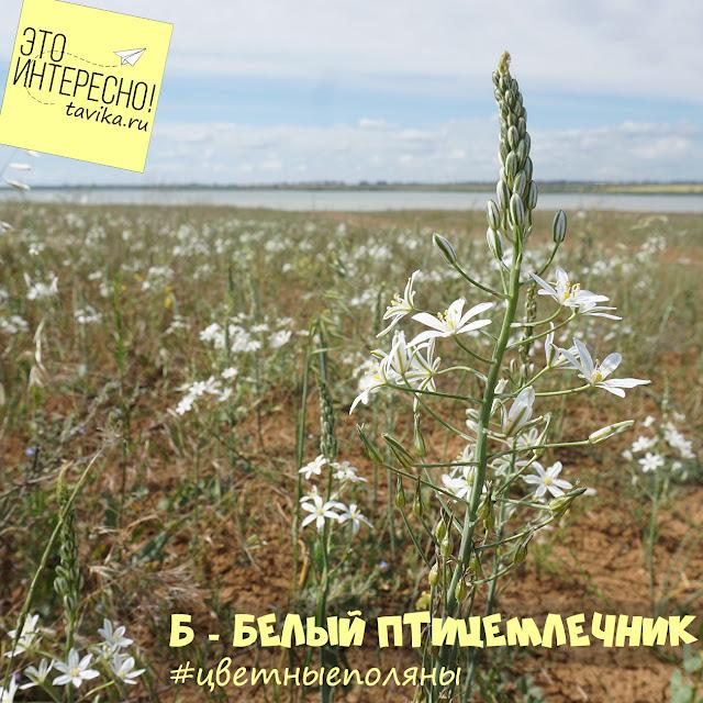 цветущая степь, Крым