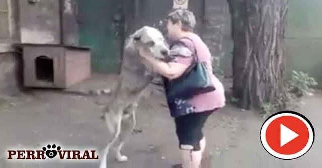 Dos años después de que le robaron su perro tuvo este precioso reencuentro