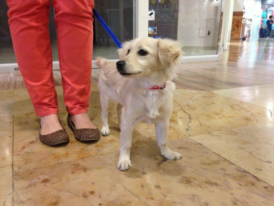 Adoption Female Dog Small