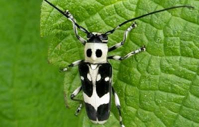 Habitat dan Keanekaragaman Coleoptera - Cara Petani Budidaya