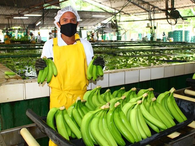"""""""Bananeros del Magdalena, La Guajira y César,  fortalecen alianza con las autoridades para  mitigar el flagelo del  narcotráfico"""" Asbama"""