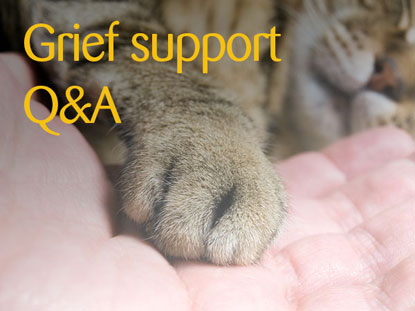 Grief support Q&A Cats Protection