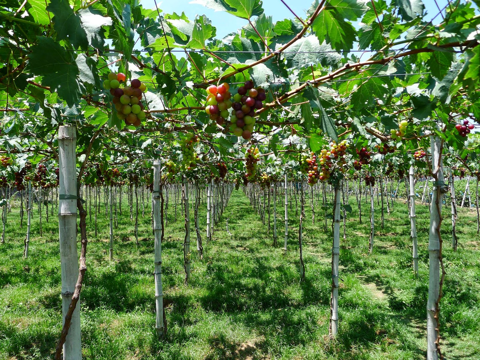 Bauang, La Union: Visiting the Grapes Capital of the ...