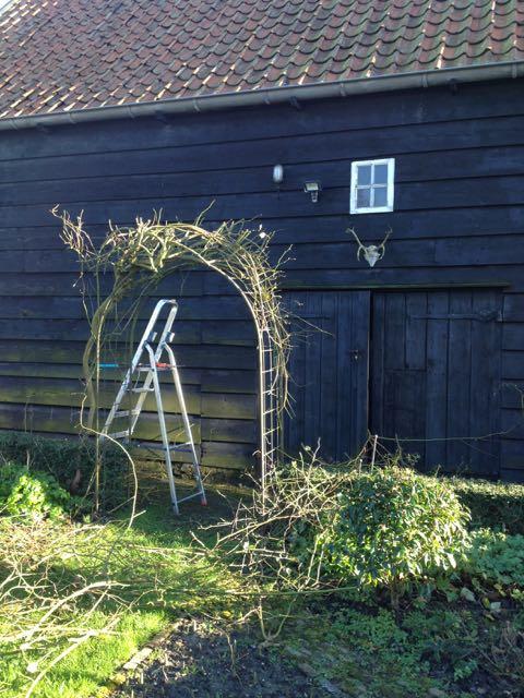 pruning climbing roses. Black Bedroom Furniture Sets. Home Design Ideas