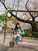 千鳥之淵櫻花-playground
