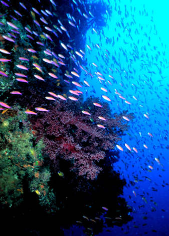 http://www.oceancouncil.org/site/