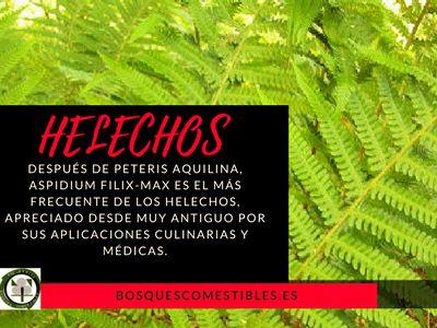 Helechos,-después-de-Peteris-aquilina,-Aspidium-filix-max-es-el-más-frecuente