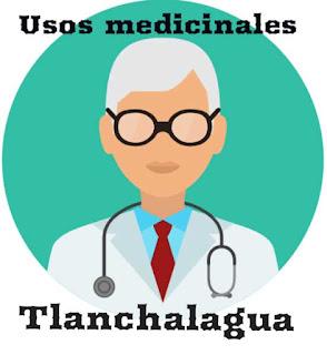 Tlanchalagua, usos medicinales