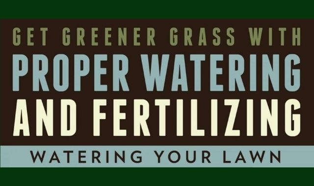 How to Properly Water and Fertilise Your Lawn
