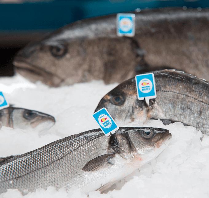 Los pescados de Crianza de Nuestros Mares: una alternativa saludable para cuidarnos