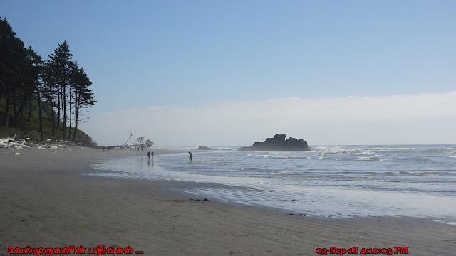 Ruby Beach tide pools Washington