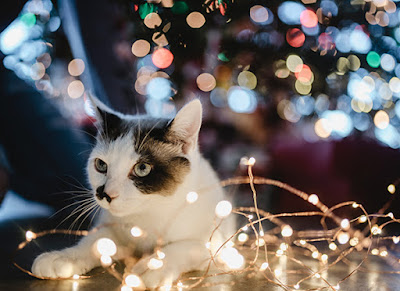 A white cat with brown and black markings is sitting amongst fairy lights underneath a Christmas tree