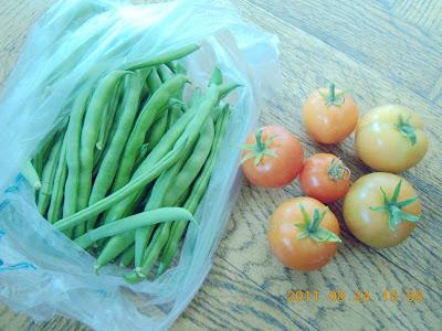 鳳英燕: 老爸種的蔬菜 --- 茄子 . 蕃茄 . 豆子
