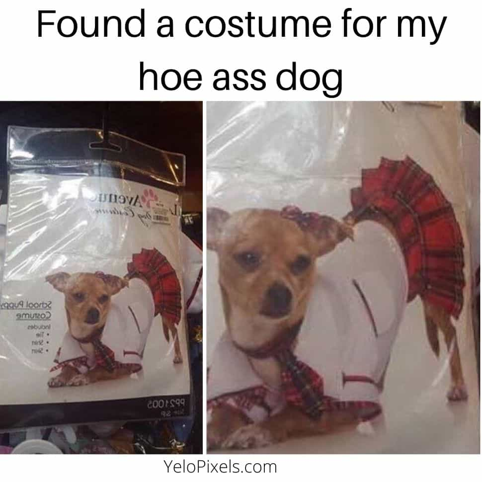 Found-a-costume-for-my-hoe-ass-dog-best-memes-of-the-day