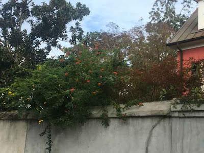 Garden Wall in Charleston South Carolina