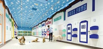 Image - How to Find the Best Pet Hotels