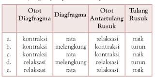 Contoh Soal Biologi Bab 6 Tentang Sistem Pernafasan Pada Manusia Dan Hewan Kelas 11 IPA
