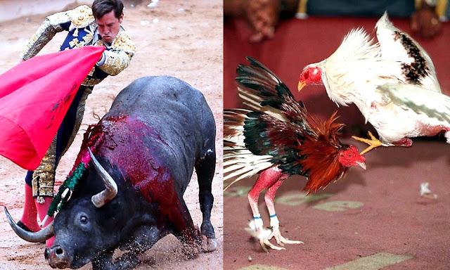 Miles de peruanos defienden corridas de toros y peleas de gallos
