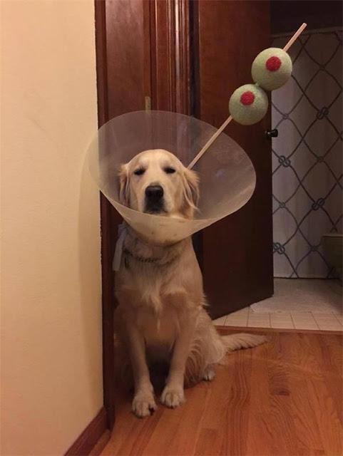 Phận chó đáng thương