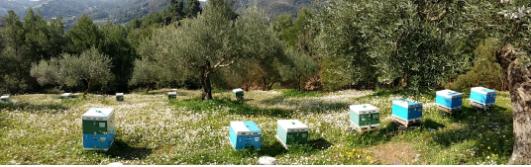 Τα μελισσάκια του Νίκου απο Καλφα