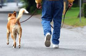 cães passeando