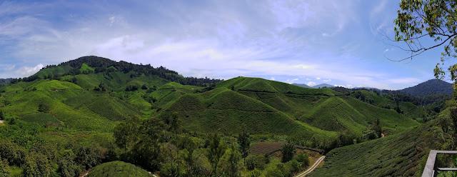 Cameron Highlands - plantacja herbaty
