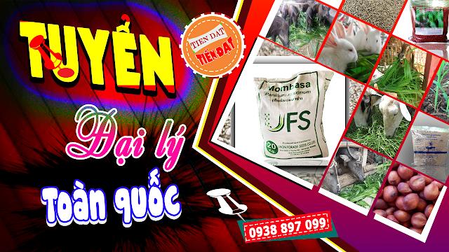 Bảng giá bán hạt giống cỏ Ghine Mombasa và Ghine TD58