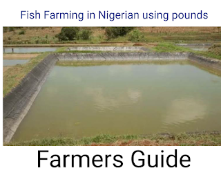 Fish Farming in Nigeria (Must Know)