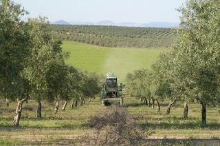 Al menos 60 familias de las 200 más adineradas de España cobraron desde 2008 alrededor de 1,1 millones de subvenciones por cada sociedad, cuando cada uno de los 900.000 agricultores españoles que optaron a estas ayudas se llevó 44.000 euros