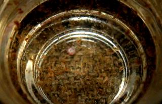 Gambar kutu air