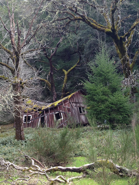 Collapsed Barn in Spring, Northern California, Route 128 by Rachel Medanic