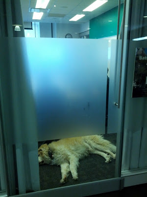 Google Dog Sleeping In Conference Room