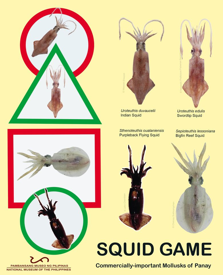 """SQUID GAME. Will you accept the challenge and play children's games with us? Today we play """"Red Light, Green Light"""" as we introduce some of the species of squids identified as one of the commercially important mollusks of Panay."""