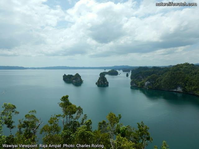 Sightseeing tour in Raja Ampat by motorized boat