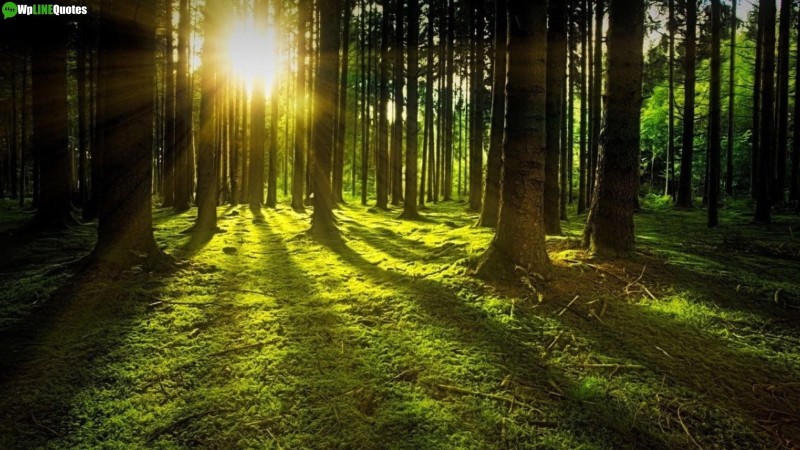 International Day Of Forests Quotes, Slogans, Theme, Facts, Images, Poster