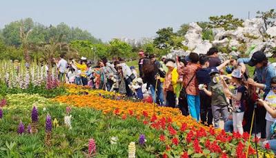 Kupu – Kupu Cantik di Hampyeong Butterfly Festival