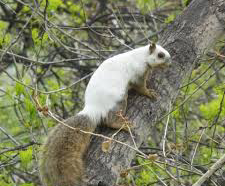 Rare piebald squirrel spotted in Colorado tree|interesting news