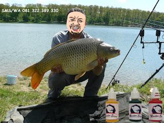 Essen Khusus Ikan Mas