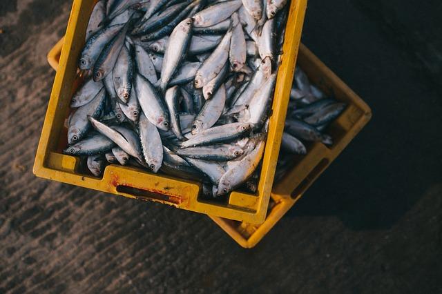 Microplásticos en el pescado