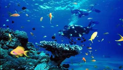 Snorkeling Pantai Tanjung Tinggi
