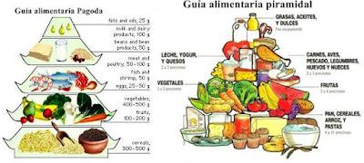 Nutrición humana: suministro de energía, metabolismo basal, composición corporal