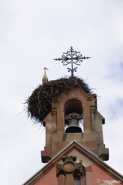 Le cicogne sono su tanti tetti alsaziani