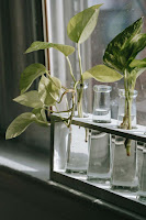 Rooting plants in window