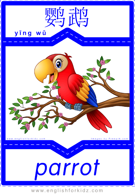 Parrot - printable English-Chinese flashcards - pets