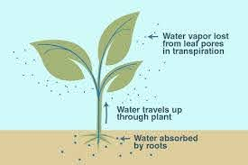 What are the different types of Transpiration