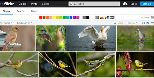 Flickr: Most Popular Images Search Engines: eAskme