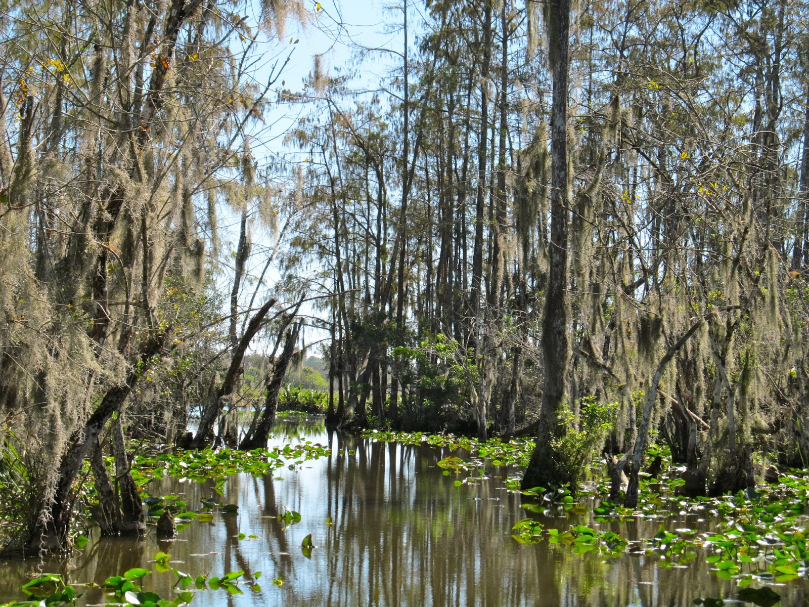 Billie Swamp Safari, Florida Everglades