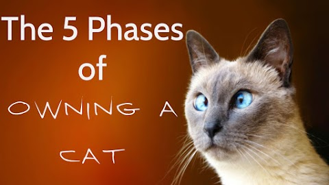 The 5 Phases of Owning a Cat